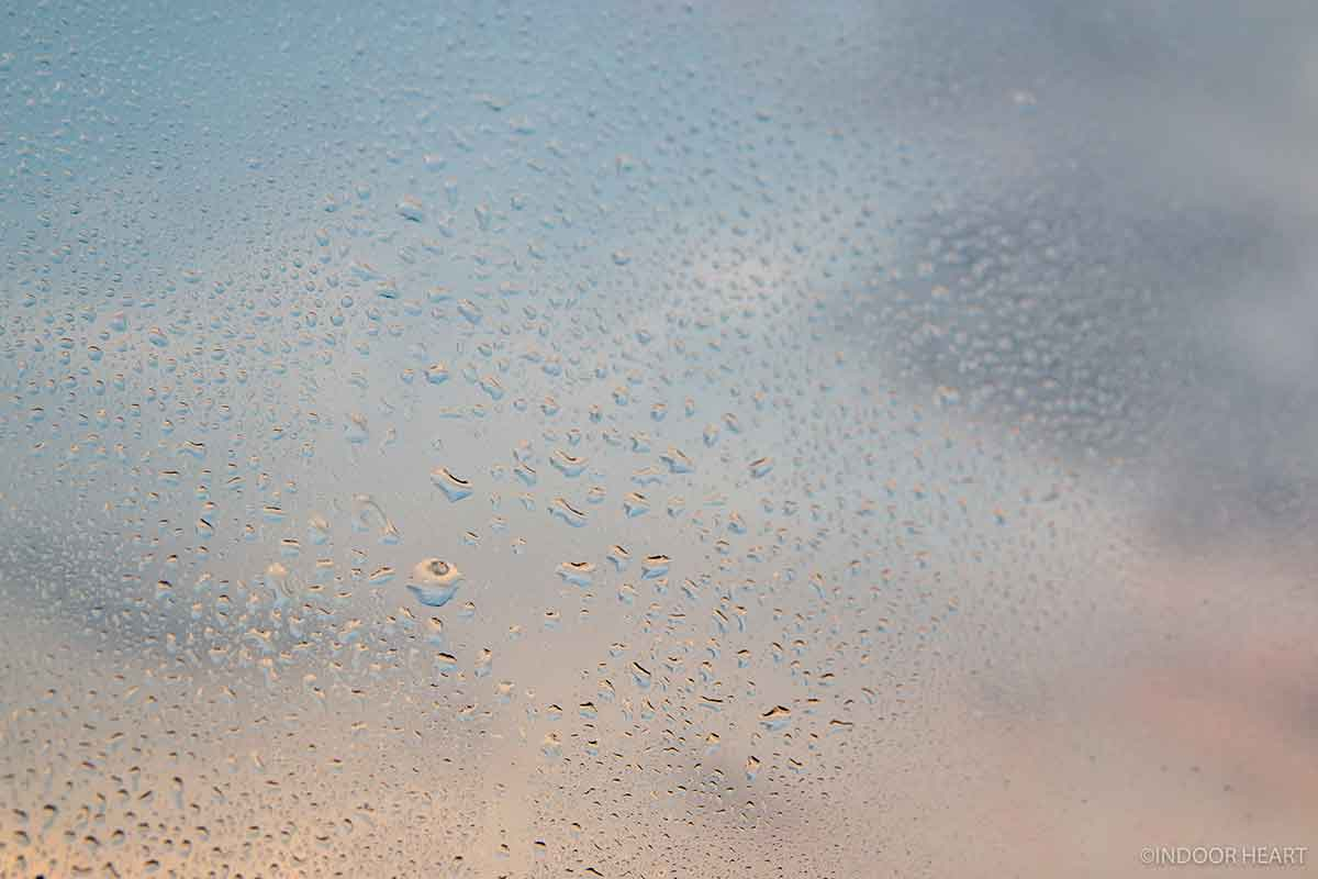 霧吹きの水
